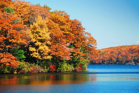 Fall foliage planner: find the best times and places to enjoy the season